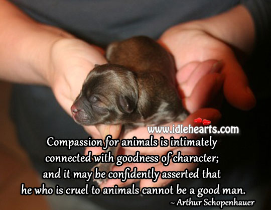 He Who Is Cruel To Animals Cannot Be A Good Man.