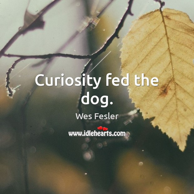 Curiosity fed the dog. Wes Fesler Picture Quote