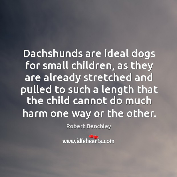 Dachshunds are ideal dogs for small children, as they are already stretched Image