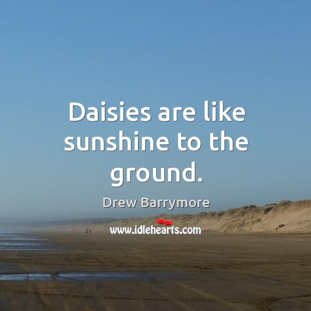 Image, Daisies are like sunshine to the ground.