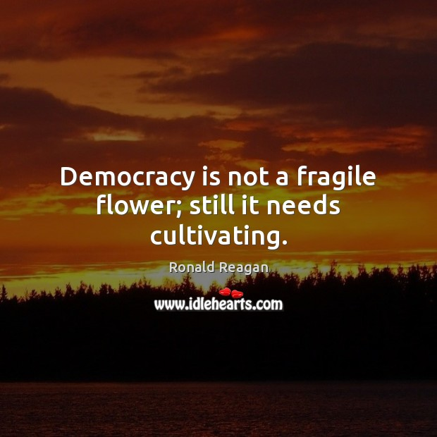 Image, Democracy is not a fragile flower; still it needs cultivating.
