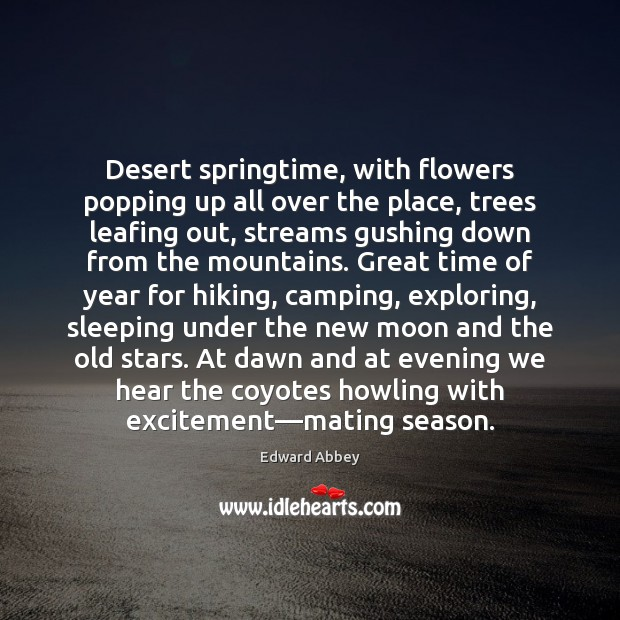 Desert springtime, with flowers popping up all over the place, trees leafing Image