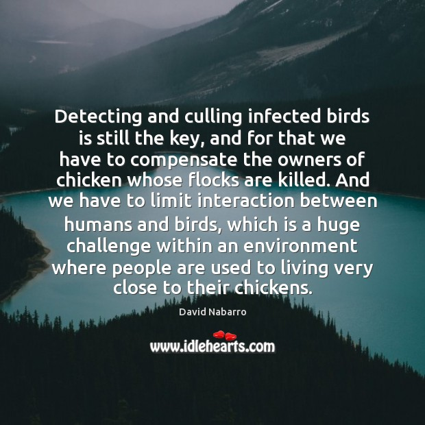 Detecting and culling infected birds is still the key, and for that Image