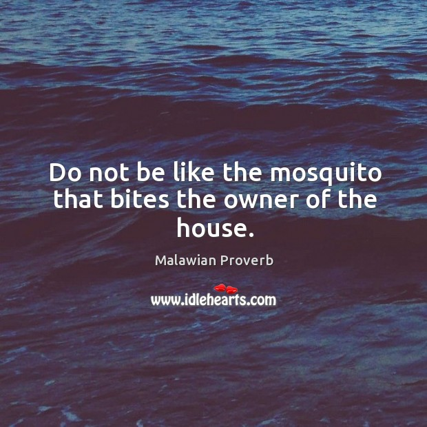 Do not be like the mosquito that bites the owner of the house. Malawian Proverbs Image