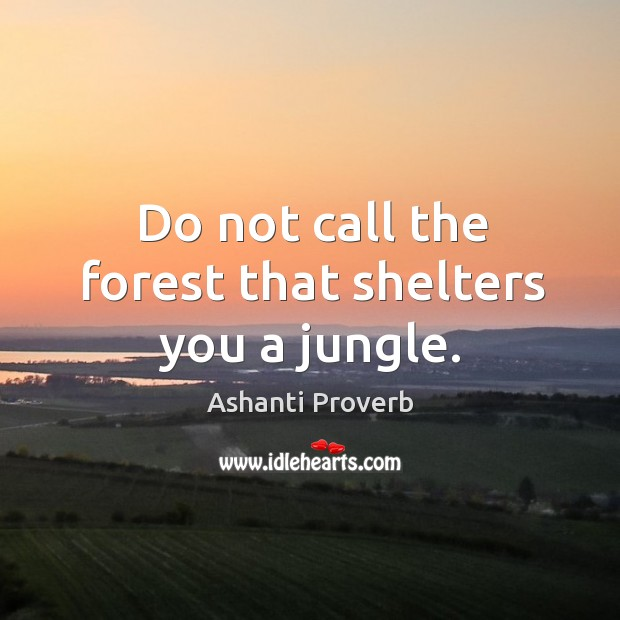 Do not call the forest that shelters you a jungle. Ashanti Proverbs Image