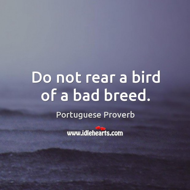 Do not rear a bird of a bad breed. Image