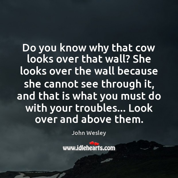 Do you know why that cow looks over that wall? She looks John Wesley Picture Quote