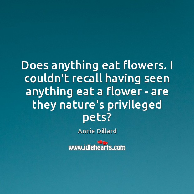Does anything eat flowers. I couldn't recall having seen anything eat a Image