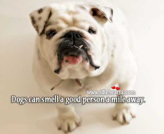 Image, Dogs can smell a good person a mile away.