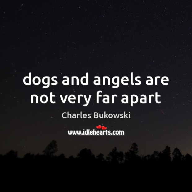 Dogs and angels are not very far apart Image