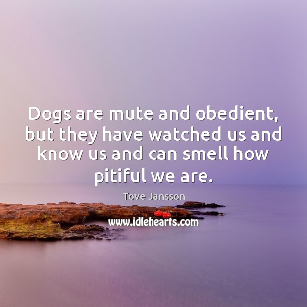 Dogs are mute and obedient, but they have watched us and know Tove Jansson Picture Quote