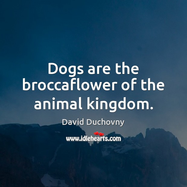 Dogs are the broccaflower of the animal kingdom. David Duchovny Picture Quote