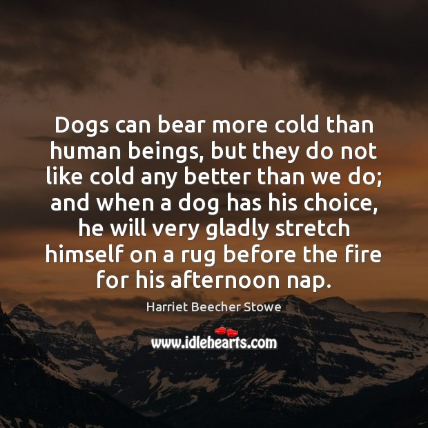 Image, Dogs can bear more cold than human beings, but they do not