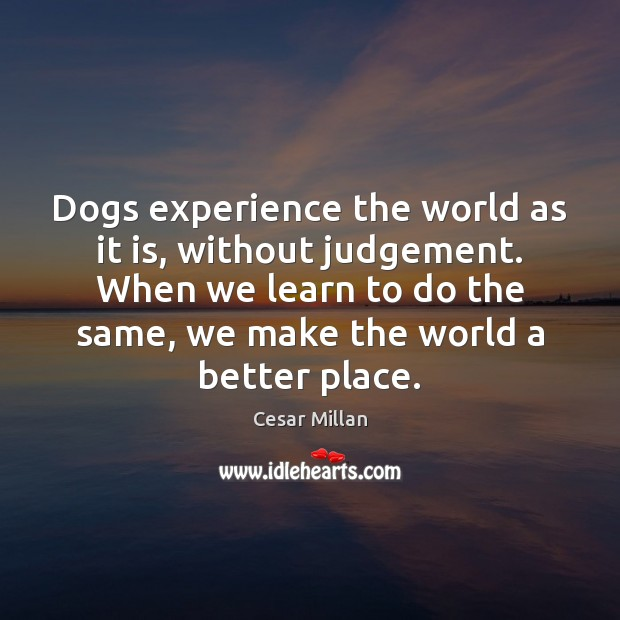 Dogs experience the world as it is, without judgement. When we learn Image