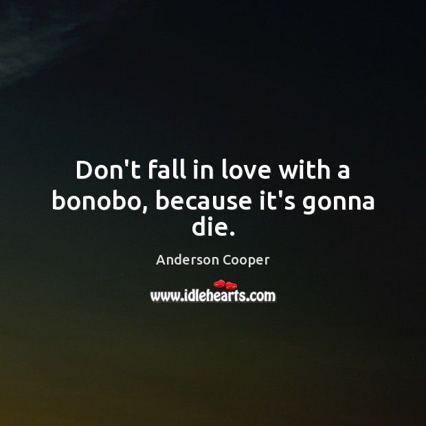 Don't fall in love with a bonobo, because it's gonna die. Image