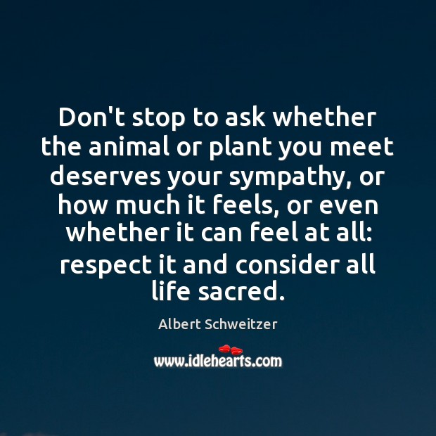 Don't stop to ask whether the animal or plant you meet deserves Albert Schweitzer Picture Quote