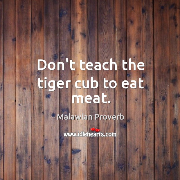 Don't teach the tiger cub to eat meat. Malawian Proverbs Image