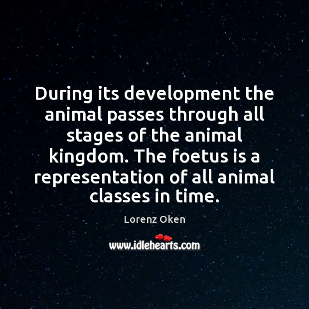 Image, During its development the animal passes through all stages of the animal