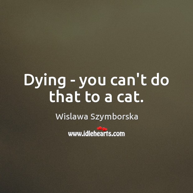 Dying – you can't do that to a cat. Image