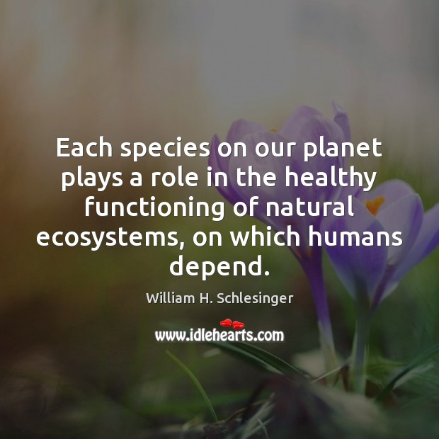 Each species on our planet plays a role in the healthy functioning Image