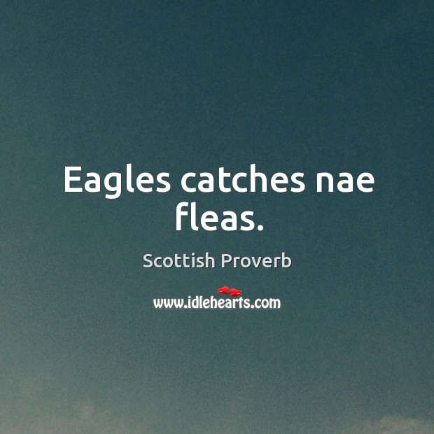 Image about Eagles catches nae fleas.