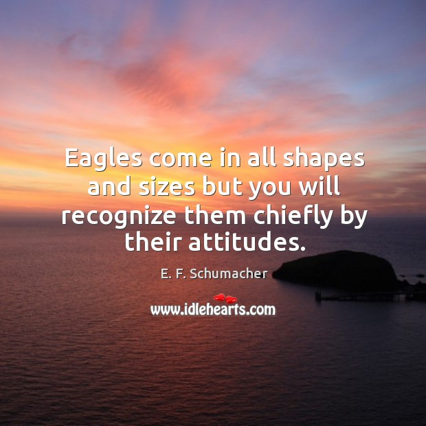 Eagles come in all shapes and sizes but you will recognize them chiefly by their attitudes. Image