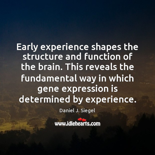 Early experience shapes the structure and function of the brain. This reveals Image