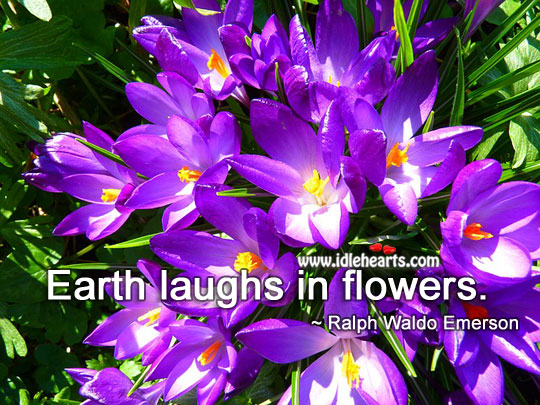 Image, Earth laughs in flowers.