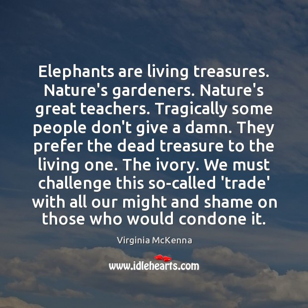 Elephants are living treasures. Nature's gardeners. Nature's great teachers. Tragically some people Image