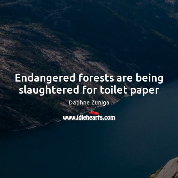 Endangered forests are being slaughtered for toilet paper Image