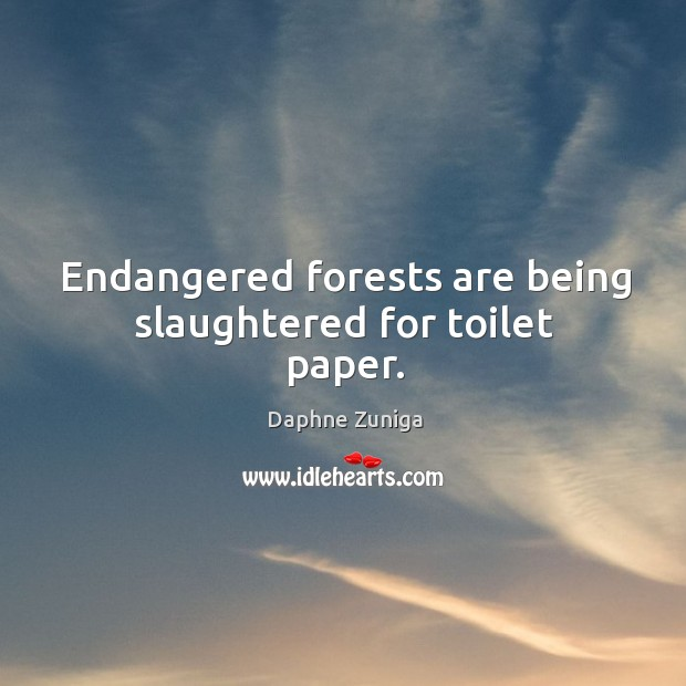 Image, Endangered forests are being slaughtered for toilet paper.
