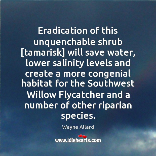 Image, Eradication of this unquenchable shrub [tamarisk] will save water, lower salinity levels