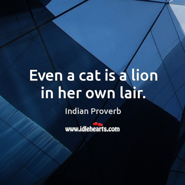 Even a cat is a lion in her own lair. Image