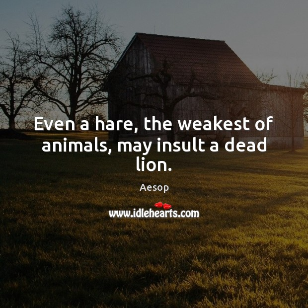 Image, Even a hare, the weakest of animals, may insult a dead lion.