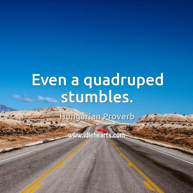 Even a quadruped stumbles. Image