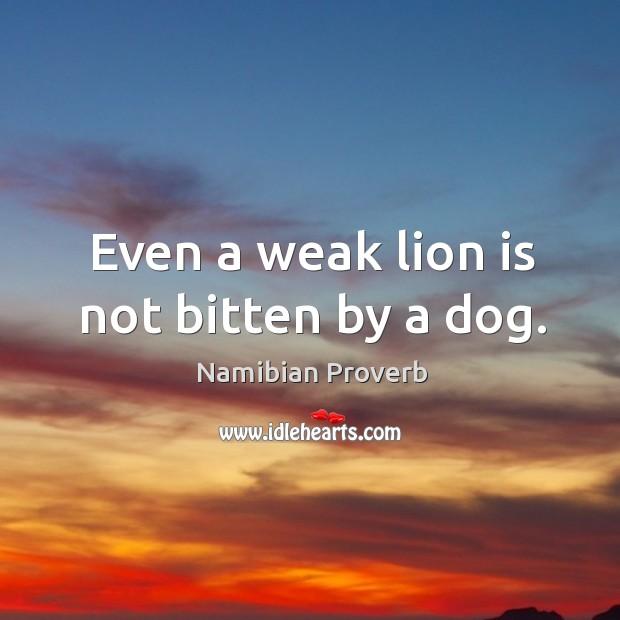 Image, Even a weak lion is not bitten by a dog.