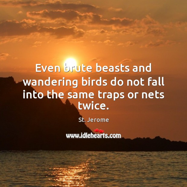 Even brute beasts and wandering birds do not fall into the same traps or nets twice. St. Jerome Picture Quote
