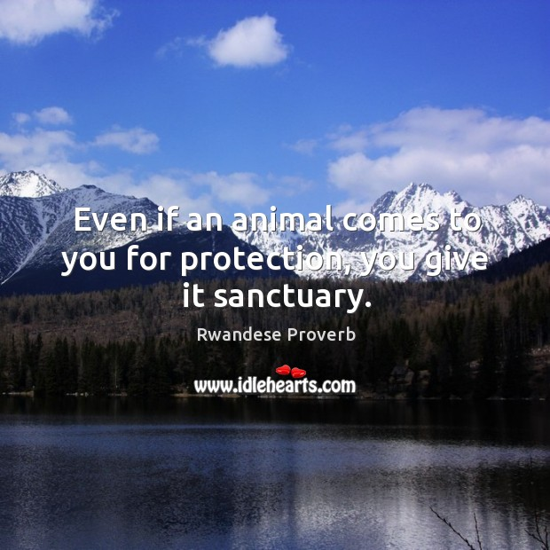 Even if an animal comes to you for protection, you give it sanctuary. Rwandese Proverbs Image