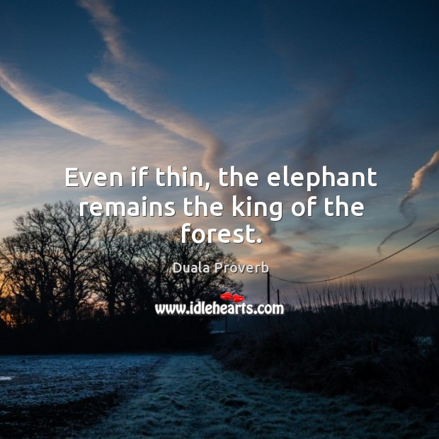 Even if thin, the elephant remains the king of the forest. Duala Proverbs Image