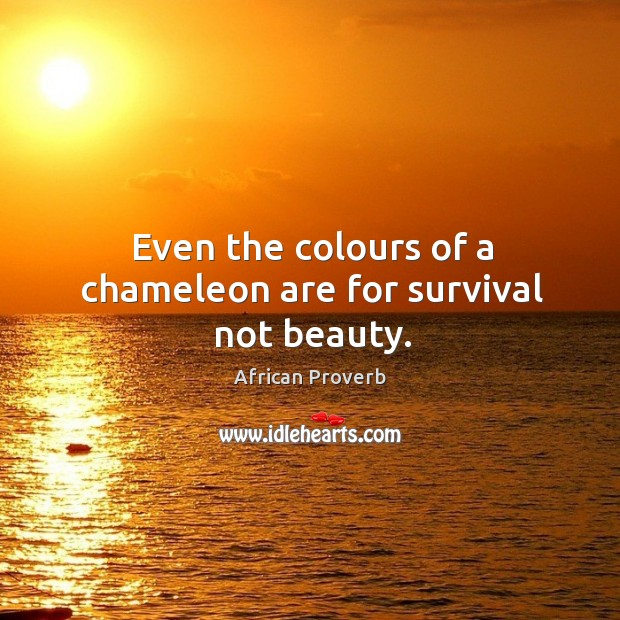 Image, Even the colours of a chameleon are for survival not beauty.