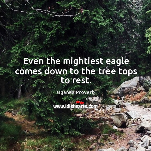 Even the mightiest eagle comes down to the tree tops to rest. Uganda Proverbs Image