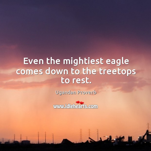 Even the mightiest eagle comes down to the treetops to rest. Ugandan Proverbs Image