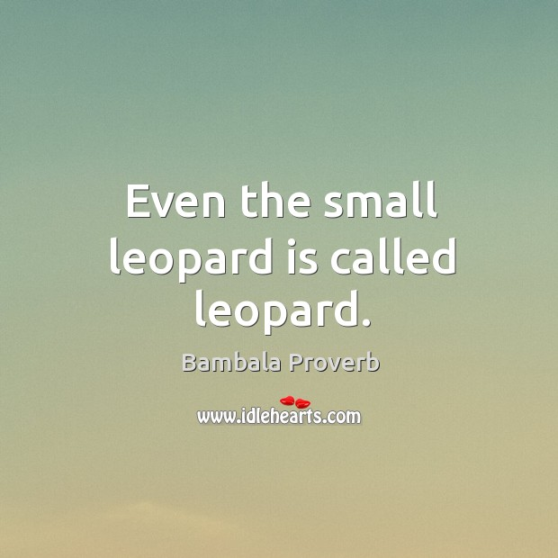Even the small leopard is called leopard. Bambala Proverbs Image