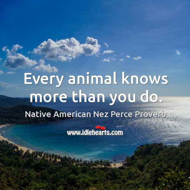 Native American Nez Perce Proverbs