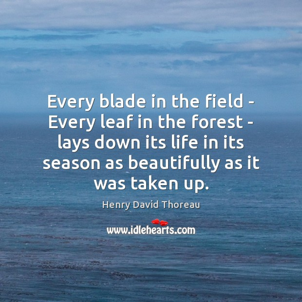 Every blade in the field – Every leaf in the forest – Image