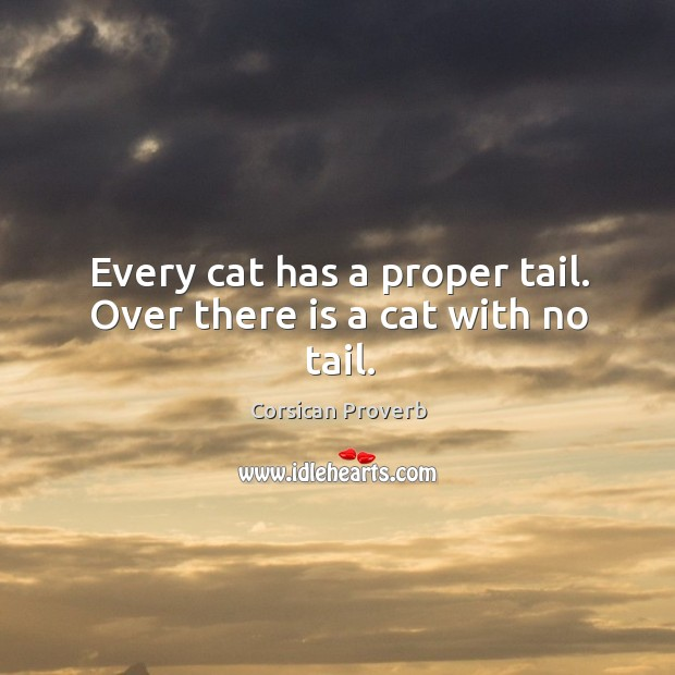 Image, Every cat has a proper tail. Over there is a cat with no tail.