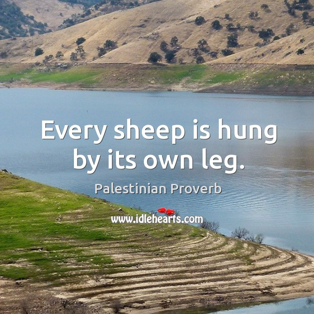Every sheep is hung by its own leg. Palestinian Proverbs Image