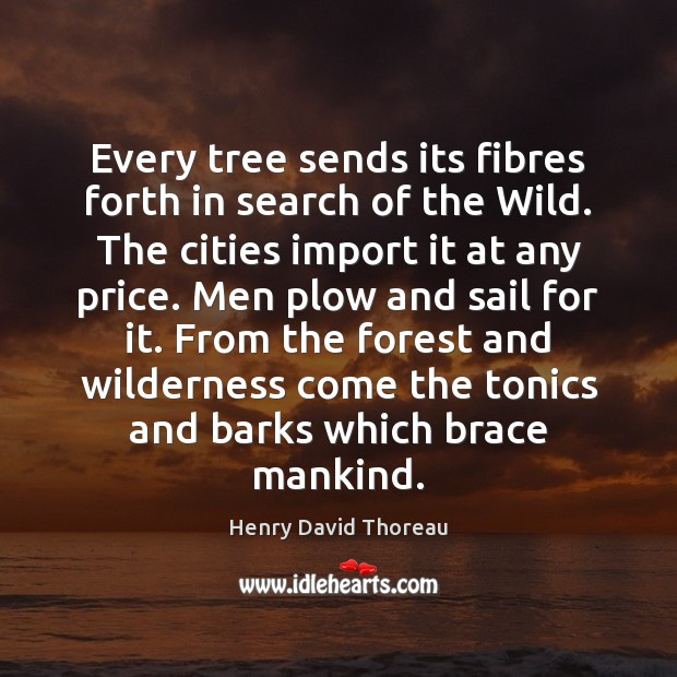 Every tree sends its fibres forth in search of the Wild. The Image