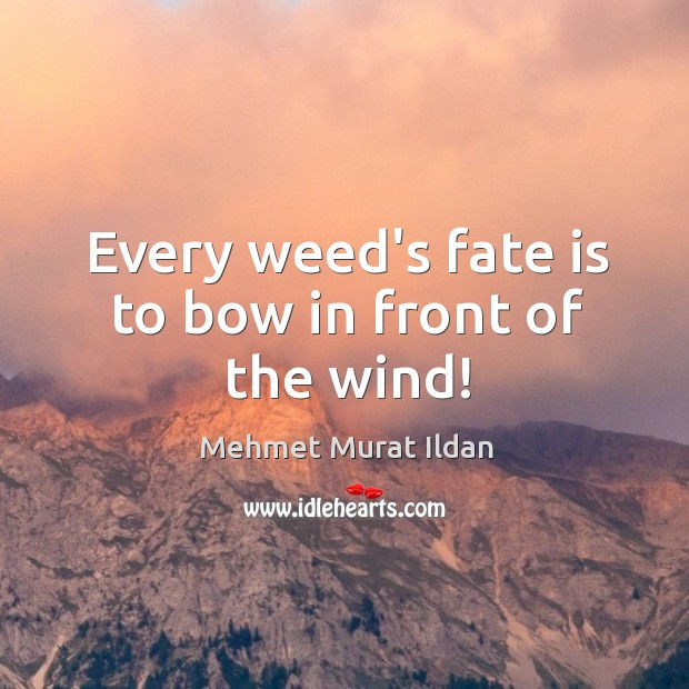 Image, Every weed's fate is to bow in front of the wind!