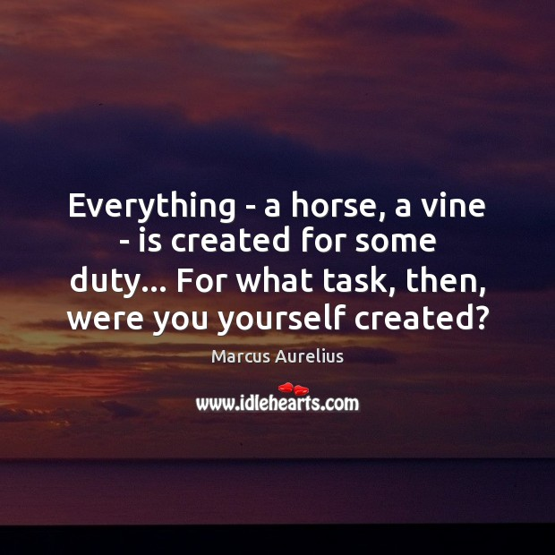 Everything – a horse, a vine – is created for some duty… Marcus Aurelius Picture Quote